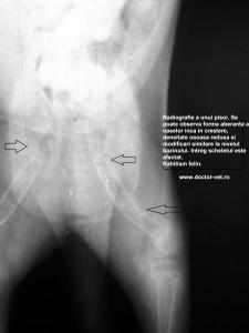 www.doctor-vet.ro