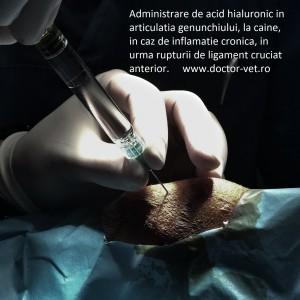 Unguent pentru artrita articula?iei genunchiului in timpul alaptarii